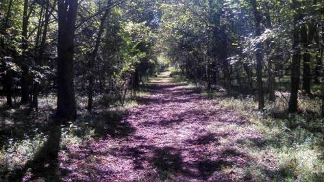 Belmead Trailfest 50K